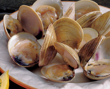 Fresh Pond Seafood Recipes For Little Necks